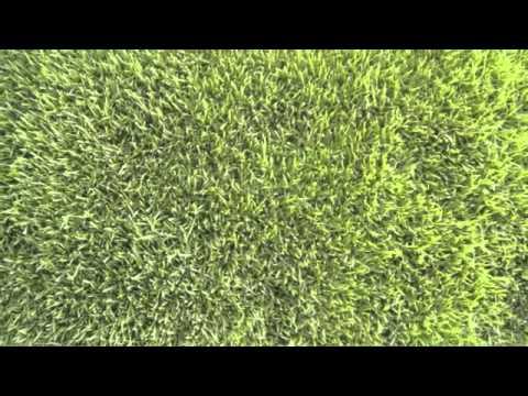 landscape enemies zoysia patch