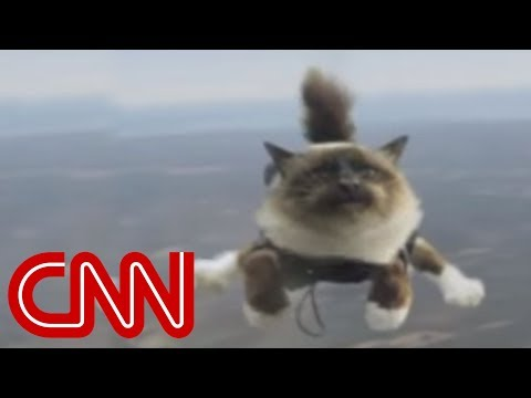 Skydiving cats cause uproar,