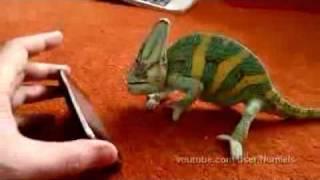 Camaleón asustado