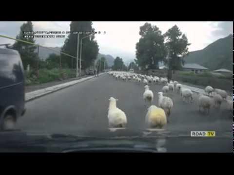 Горная дорога в Грузии и тысяча овец