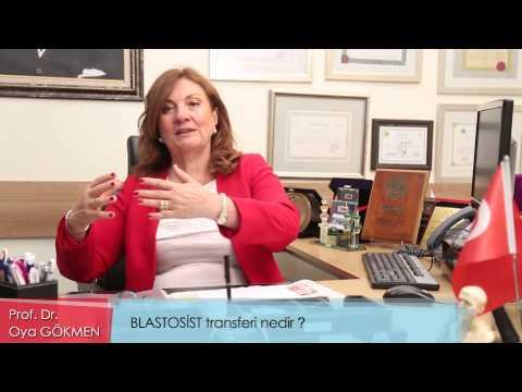 Blastosist Transferi Nedir?