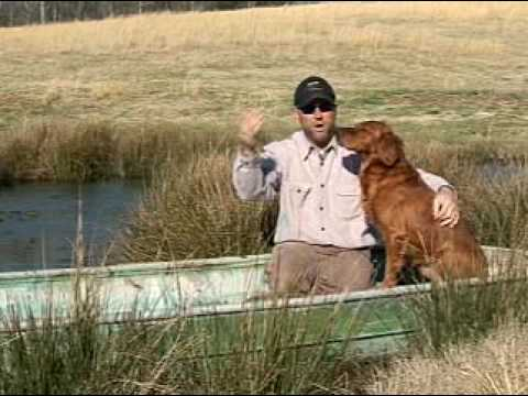 Dog Training Basics with Chris Akin - YouTube
