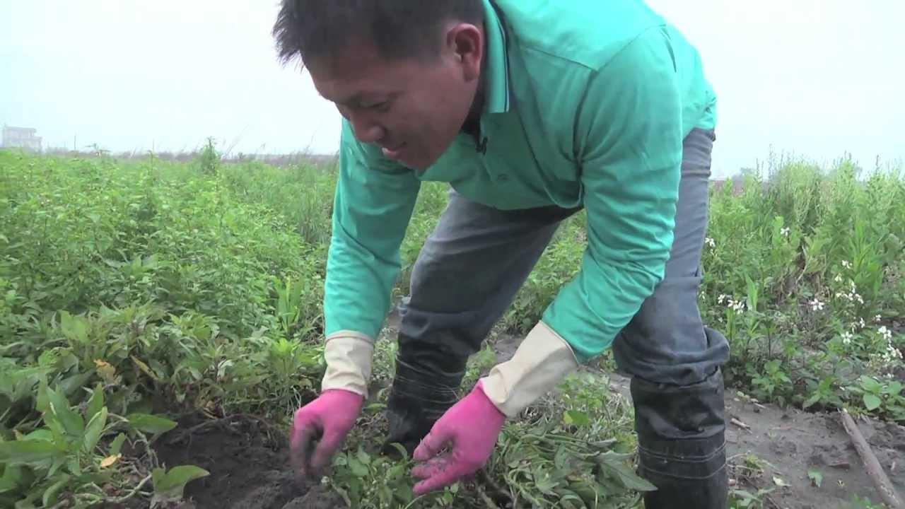 2013雲林農業博覽會甜度12影像展-永-林靖傑 黃俊淵導演(築巢築夢的地瓜)