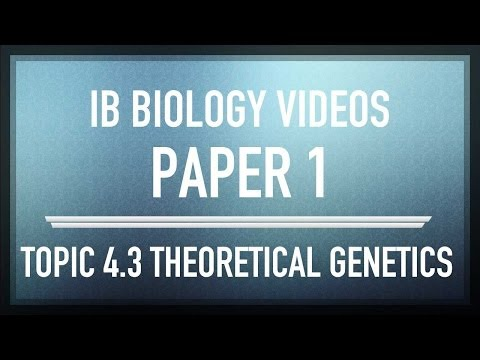 (4.3) Theoretical genetics - IB SL Biology Past Exam Paper 1 Questions