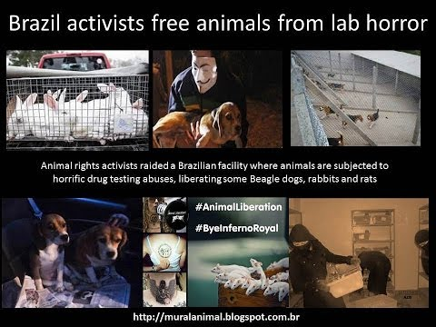 Brazil activists free animals from lab horror - Resgate Animais do Instituto Royal Beagles Ratos