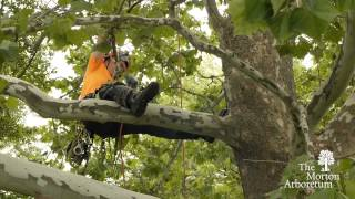 How To Become An Arborist
