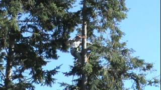 Tree Topping Fail Tree Cutting Goes Horribly Wrong