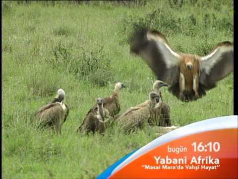 Belgesel - Yabani Afrika
