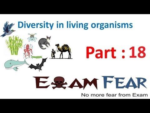 Biology Diversity in Living Organisms part 18 (Platyhelminthes) CBSE class 9 IX