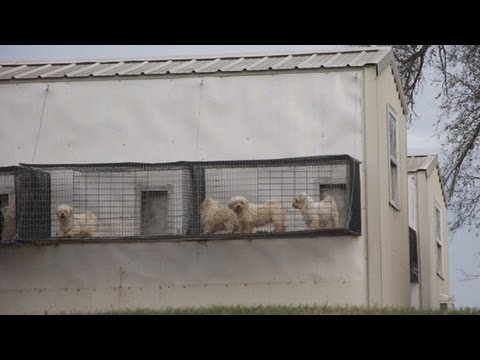 Chicago Pet Store Undercover Investigation