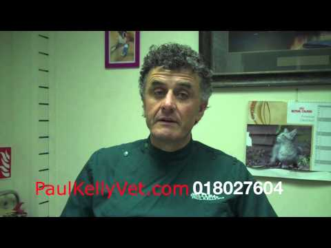 Male Dog Castration Paul Kelly Veterinary Surgeon