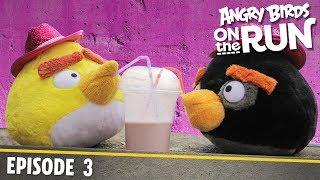 Angry Birds- Na úteku - 3 - Malý žralok