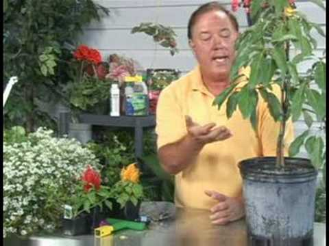 Grow Avocado Tree Youtube