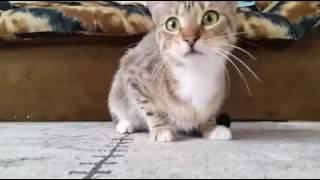 Gato viendo película de terror
