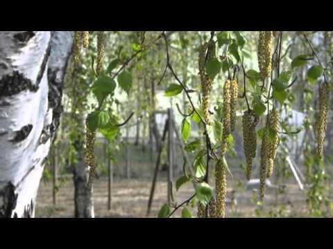 Смотреть клип Бутырка - Воздух весны