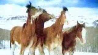 Funny Budwiser Snowball Fight Horses