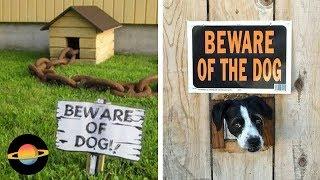 """10 najśmieszniejszych tabliczek """"uwaga pies"""""""
