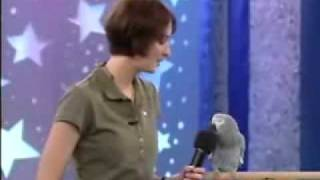 Burung Genit Berbicara dengan Cewek Cantik