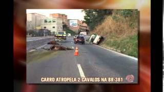 Dois cavalos �o atropelados e morrem na BR-381, em Belo Horizonte