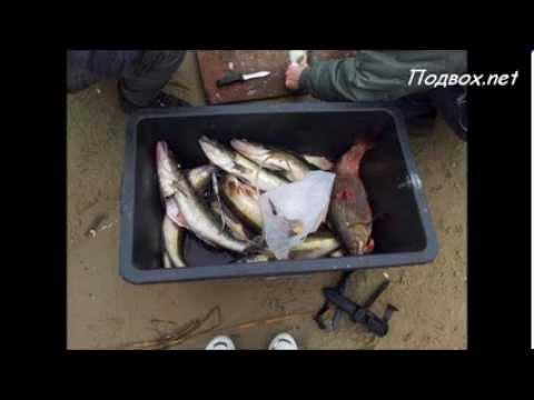 Ukraine Winter Spearfishing