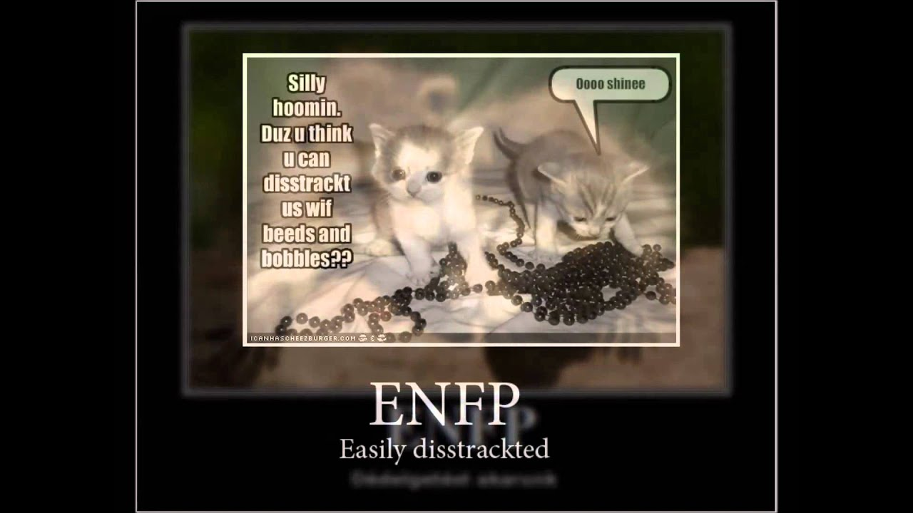 Enfj dating istp