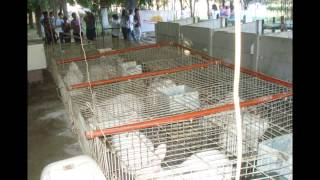 El negocio de la cría de conejos