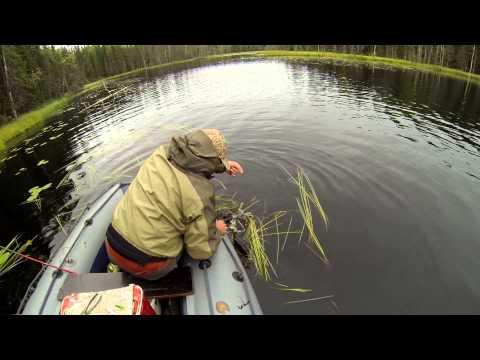 рыбалка на лакаше