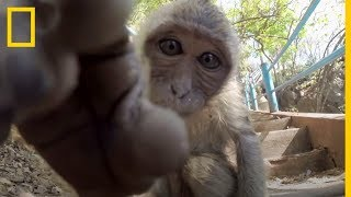 Selfies divertidos de animales