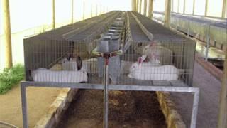 Cria de conejos - Instalaciones en ambientes controlados