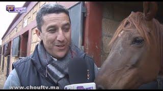 بالفيديو.. أنا و صاحبي الحيوان.. كل ما يجب معرفته عن تربية الخيول | أنا و صاحبي الحيوان