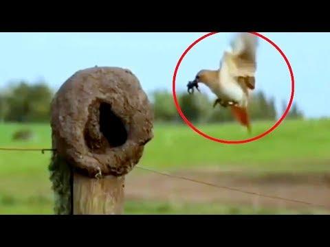 Chim sẻ lò & Tổ chim đẹp nhất