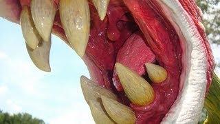TRIFFIDS - A PLANTA ASSASSINA - Completo - Dublado