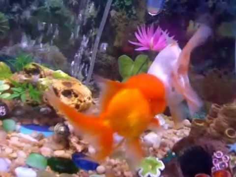 How Fish Make Babies