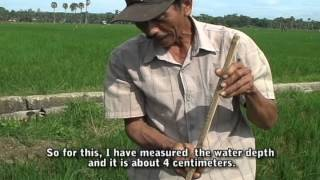 Farmers tell their stories: A water-saving tool in the rice field (Alat menghemat air di sawah) view on youtube.com tube online.