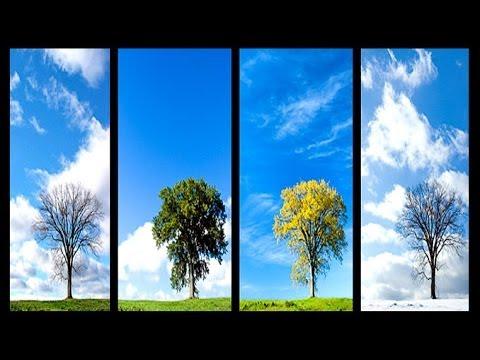 The Four Seasons --- Liguang Wang