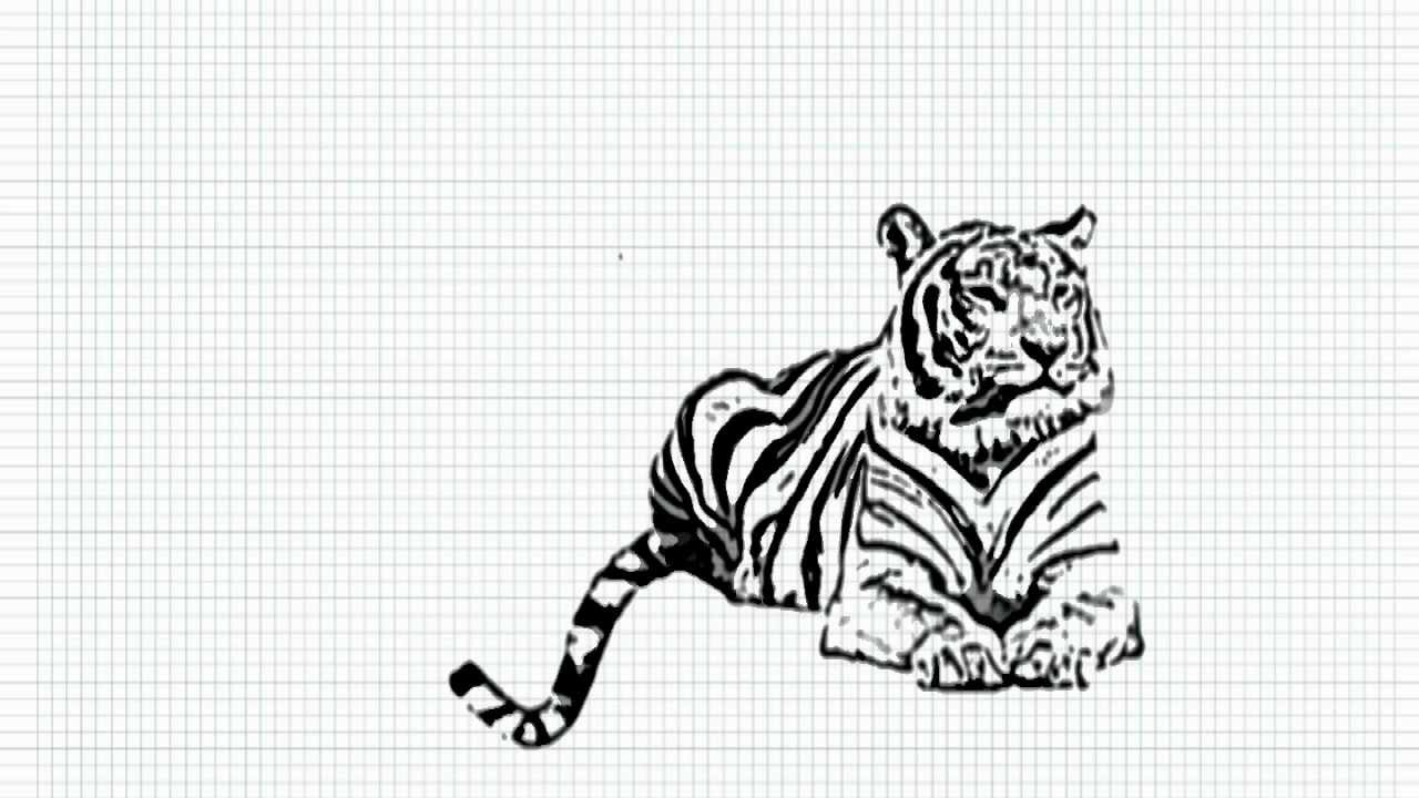 Viewing gallery for how to draw a tiger step by step realistichow to draw a