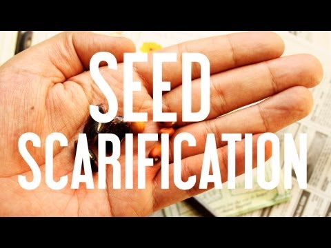 Thumbnail image for 'Seed Starting: Seed Scarification'