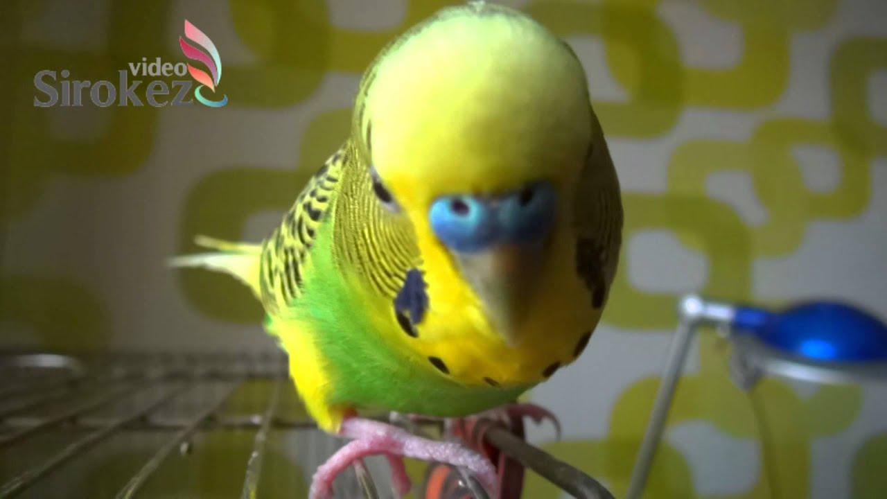 Смотри фото секс валнистава попугая 11 фотография