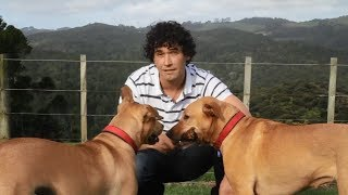 How To Train A Dog? Online Dog Training Tips By