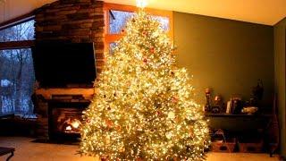 Parece uma árvore de natal normal, mas esconde um segredo radiante!