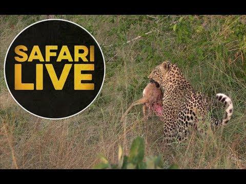 safariLIVE - Sunrise Safari - May, 16. 2018