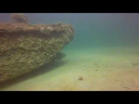 Dive Charters: Fetchin Southwest: Pace's Reef/Barge - Lee County, Florida