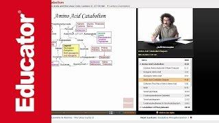 """Amino Acid Catabolism"" | Biochemistry with Educator.com"