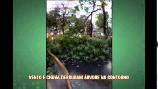Vento e chuva derrubam �rvore na Avenida do Contorno