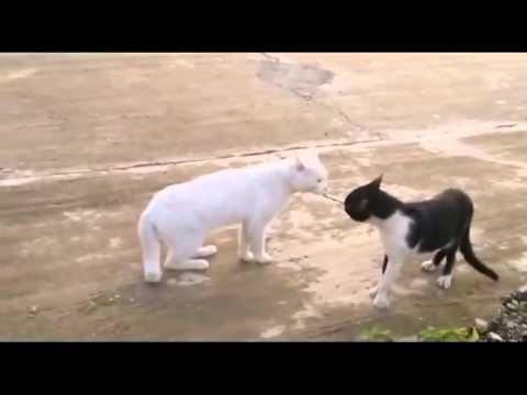 Chết cười với những pha hài hước của động vật Funny Animal