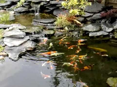 Step By Step Pond Building Koi Pond In Garden With A