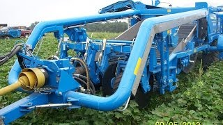STANDEN TSP1900 Sweet Potato Harvester 14 USA
