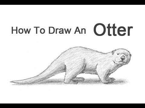 How to Draw an Otter -...