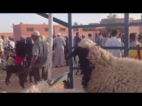 عيد الأضحى يوم الاثنين 10 ذي الحجة 1432 + فيديو