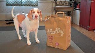 Dog vs. Shaking Bag
